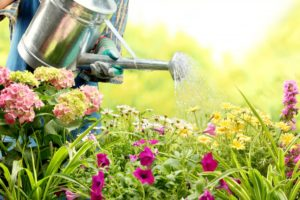 flowers being watered in the garden