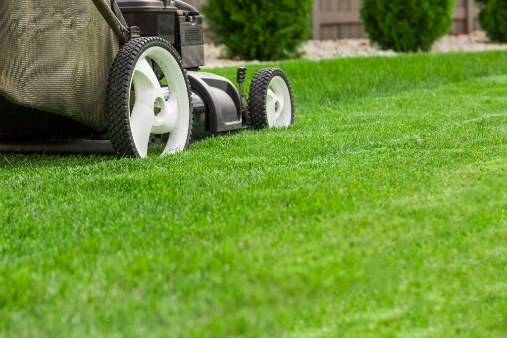 lawn mower on the lawn
