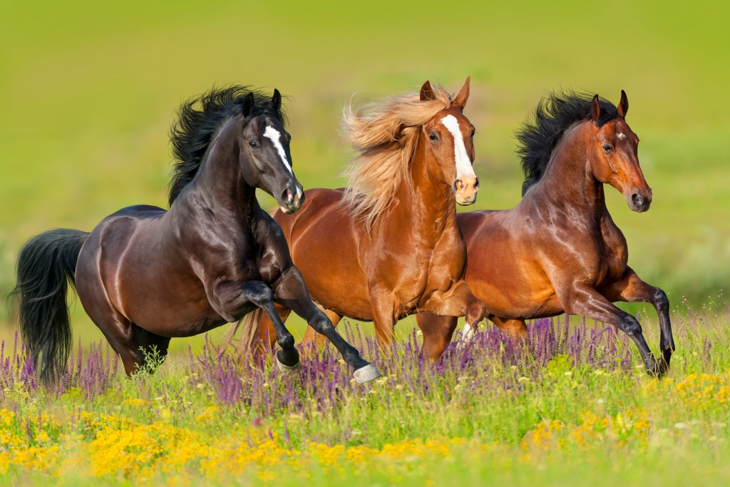 horses running in the field