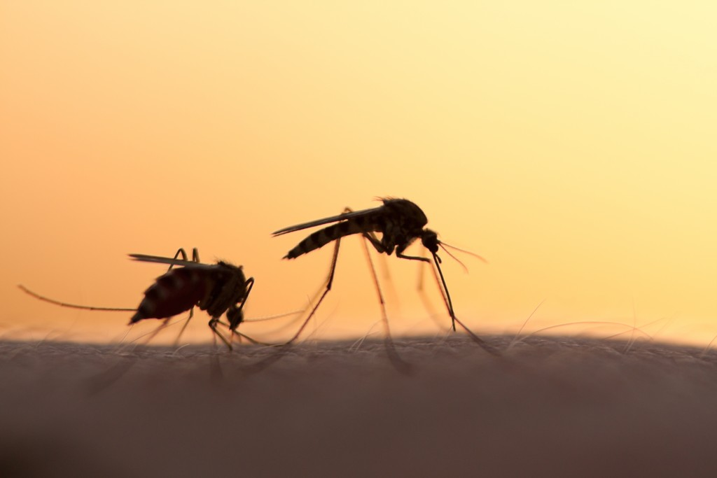 Getting Rid of Mosquitoes