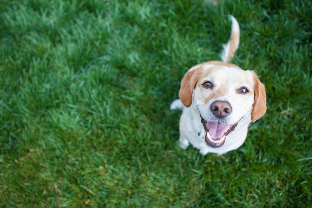 smiling dog outdoors