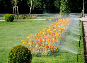 Garden with sprinklers