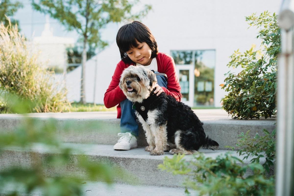 child petting a dog
