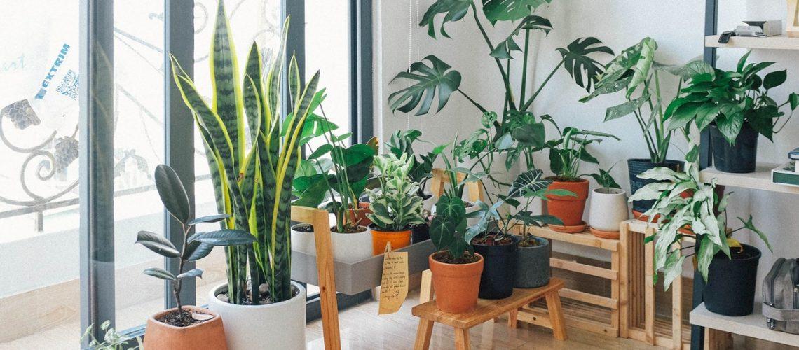 home plants